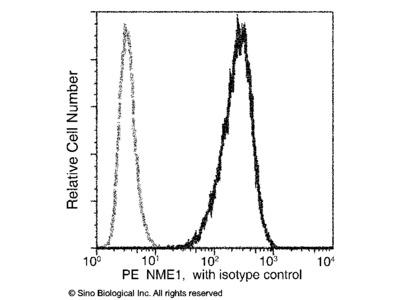 NME1 / NDKA Antibody (PE), Mouse MAb