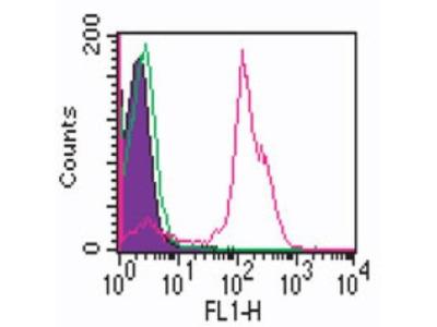 Mouse Monoclonal CD2 Antibody