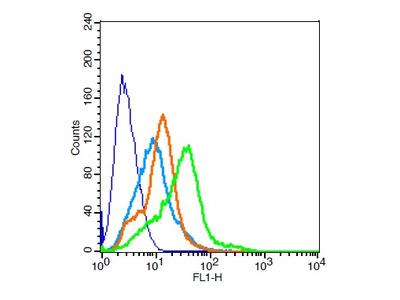 TPIA2/PTPRN Antibody