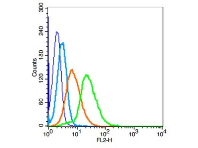 AMHR2 Antibody, ALEXA FLUOR® 488 Conjugated