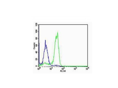 SP-C Antibody, ALEXA FLUOR® 488 Conjugated