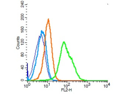 CD34 Antibody, Cy5.5 Conjugated