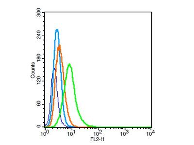 PCDH20 Antibody, Cy3 Conjugated