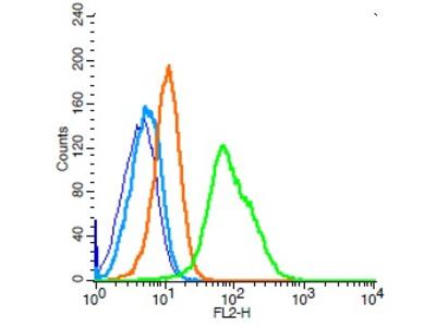 CD34 Antibody, ALEXA FLUOR® 488 Conjugated