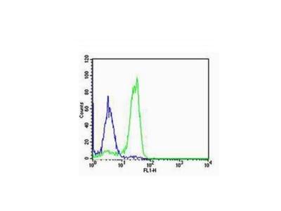 SP-C Antibody, ALEXA FLUOR® 350 Conjugated