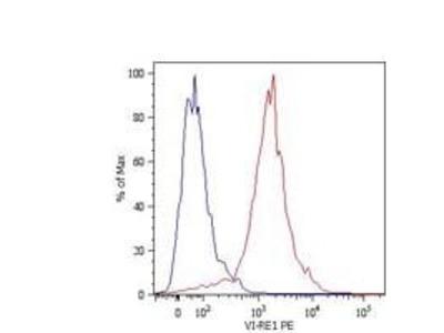 Vimentin Monoclonal Antibody (VI-RE/1), PE