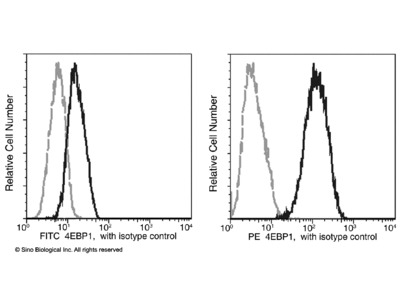 4E-BP1 / EIF4EBP1 Antibody (PE), Mouse MAb