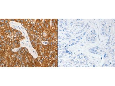 Anti-CSF3 Rabbit Polyclonal Antibody