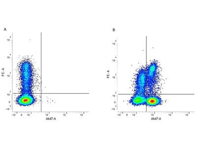 CD3 Staining Of Human PBMC For Flow Cytometry Using A Rat Anti-Human CD3:FITC Antibody (Clone CD3-12)