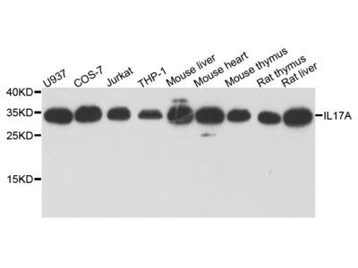 Anti-IL17A antibody