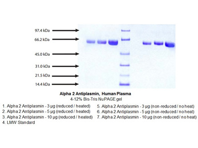 Alpha 2 Antiplasmin, Human Plasma
