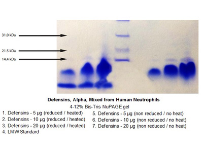 Defensins, Alpha, Mixed from Human Neutrophils (HNP, Human Neutrophil Peptides)