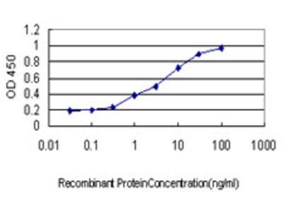 ALAS2 Monoclonal Antibody
