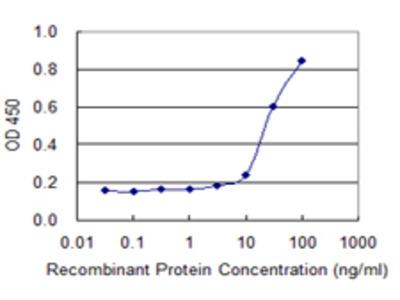 SPAG4 Monoclonal Antibody