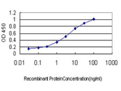 ABCC6 / MRP6 Monoclonal Antibody