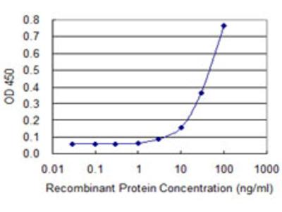 ZIC3 Monoclonal Antibody