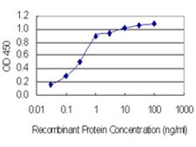 SLC37A4 / G6PT Monoclonal Antibody