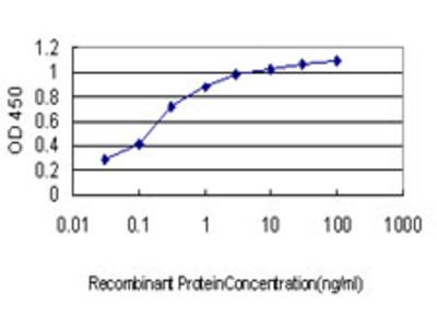 LTBP2 Monoclonal Antibody