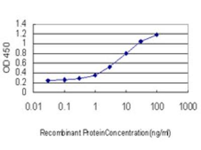 SSBP1 / mtSSB Monoclonal Antibody