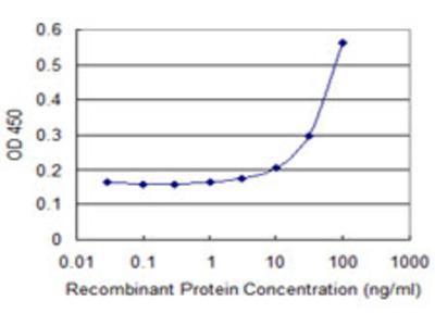 ARR3 / Cone Arrestin Monoclonal Antibody