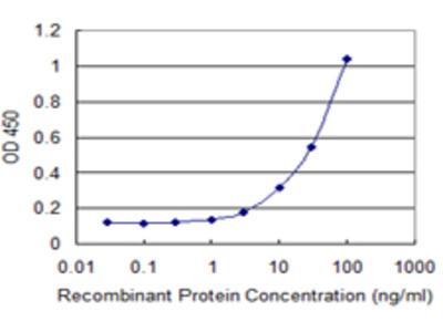 PMCH / MCH Monoclonal Antibody