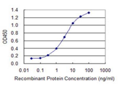 SOX12 Monoclonal Antibody