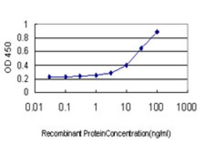TFCP2 / CP2 Monoclonal Antibody