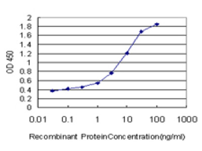 DAO / D Amino Acid Oxidase Monoclonal Antibody