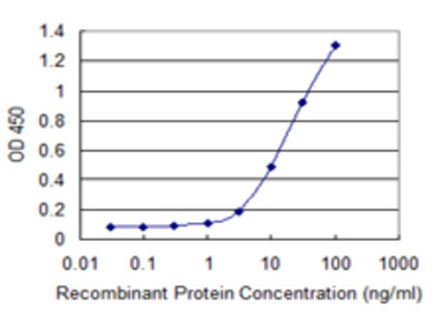 Eomesodermin / EOMES Monoclonal Antibody