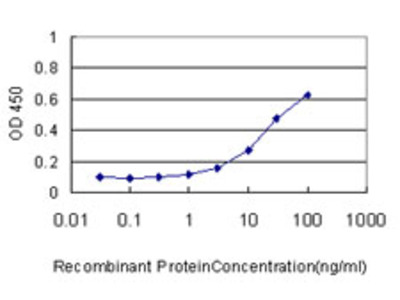 CKS1B / CKS1 Monoclonal Antibody