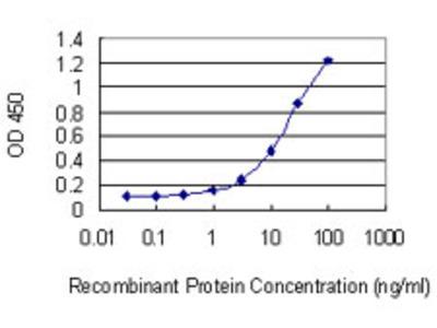 CCNT2 / Cyclin T2 Monoclonal Antibody