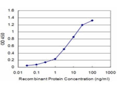 D-Binding Protein / DBP Monoclonal Antibody