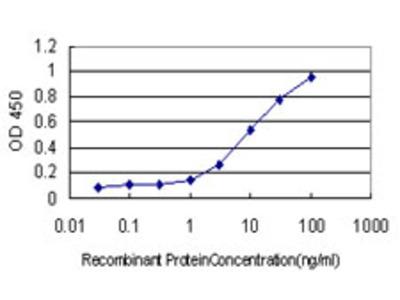 CLU / Clusterin Monoclonal Antibody