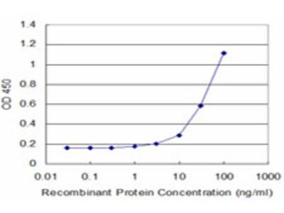 GAP43 Monoclonal Antibody