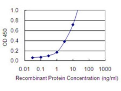 SNAP45 / SNAPC2 Monoclonal Antibody