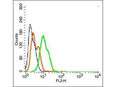 MGLUR3 antibody