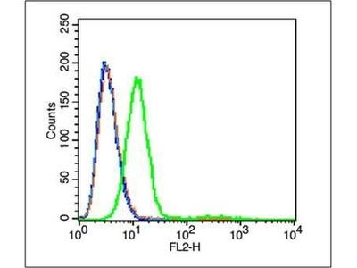 GPR100 antibody