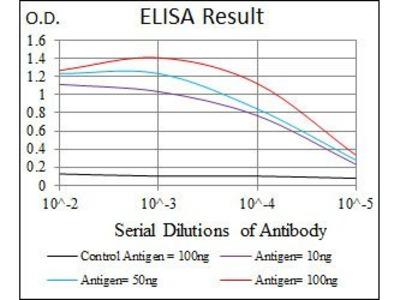 NEFH antibody