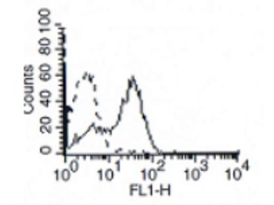 Mouse Monoclonal IL-7R alpha / CD127 Antibody