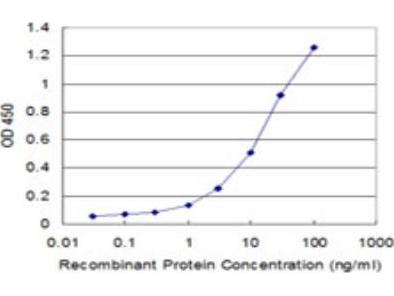 Exonuclease 1 Antibody (1H6)
