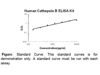 Cathepsin B (human) ELISA Kit