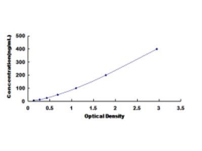 ELISA Kit for 2',5'-Oligoadenylate Synthetase 3 (OAS3)