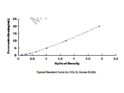 ELISA Kit for Collagen Type XII (COL12)