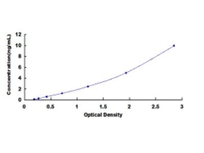 ELISA Kit for Lysyl Oxidase Like Protein 3 (LOXL3)