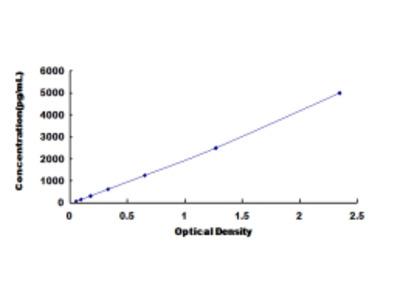ELISA Kit for Cysteine Conjugate Beta Lyase, Cytoplasmic (CCbL1)