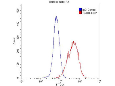 CISD2 antibody - KD/KO Validated
