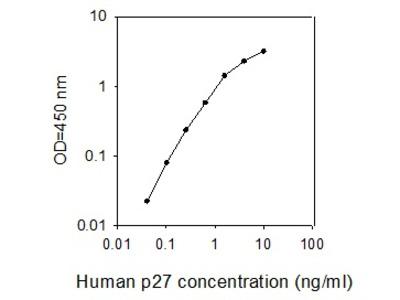 Human p27/Kip1/CDKN1B ELISA