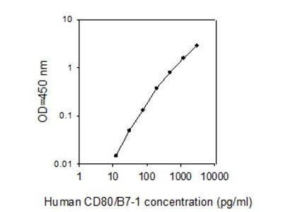 Human CD80/B7-1 ELISA