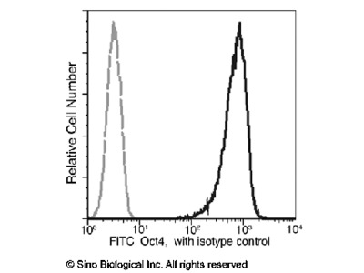 Oct4 Antibody (FITC), Mouse MAb