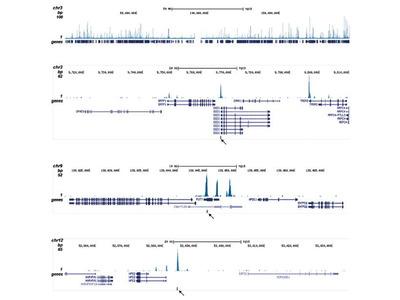 Anti-ETO / RUNX1T1 antibody - ChIP grade